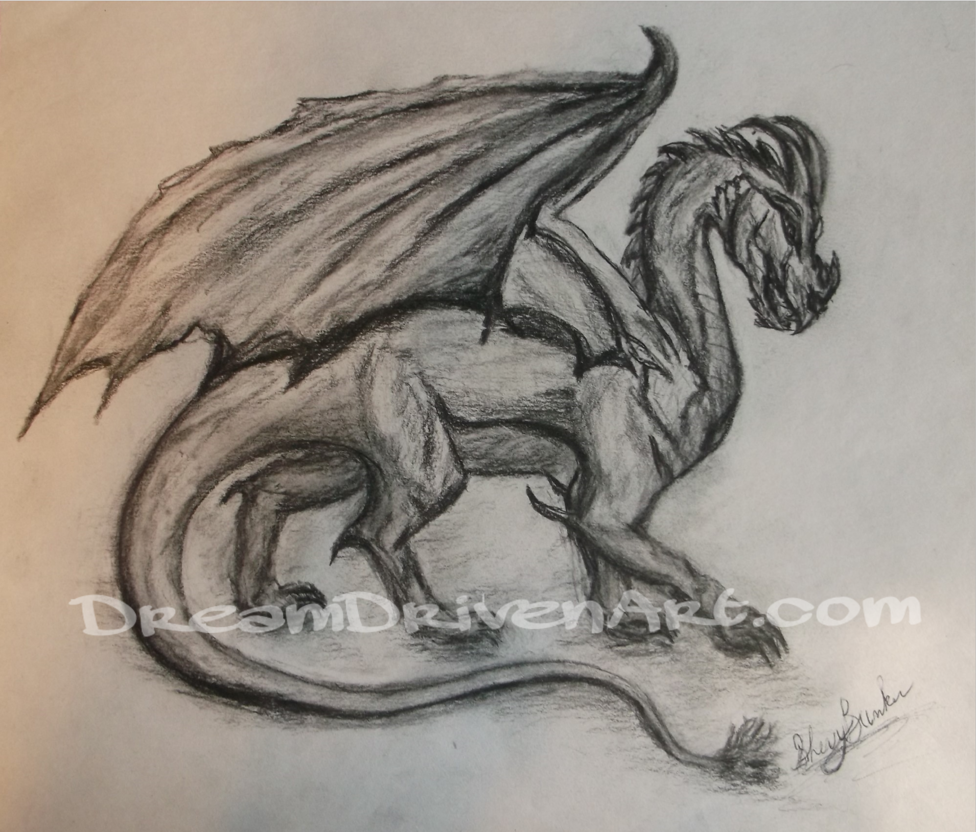Charcoal Dragon Drawing