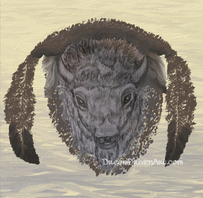 Buffalo Head Drawings