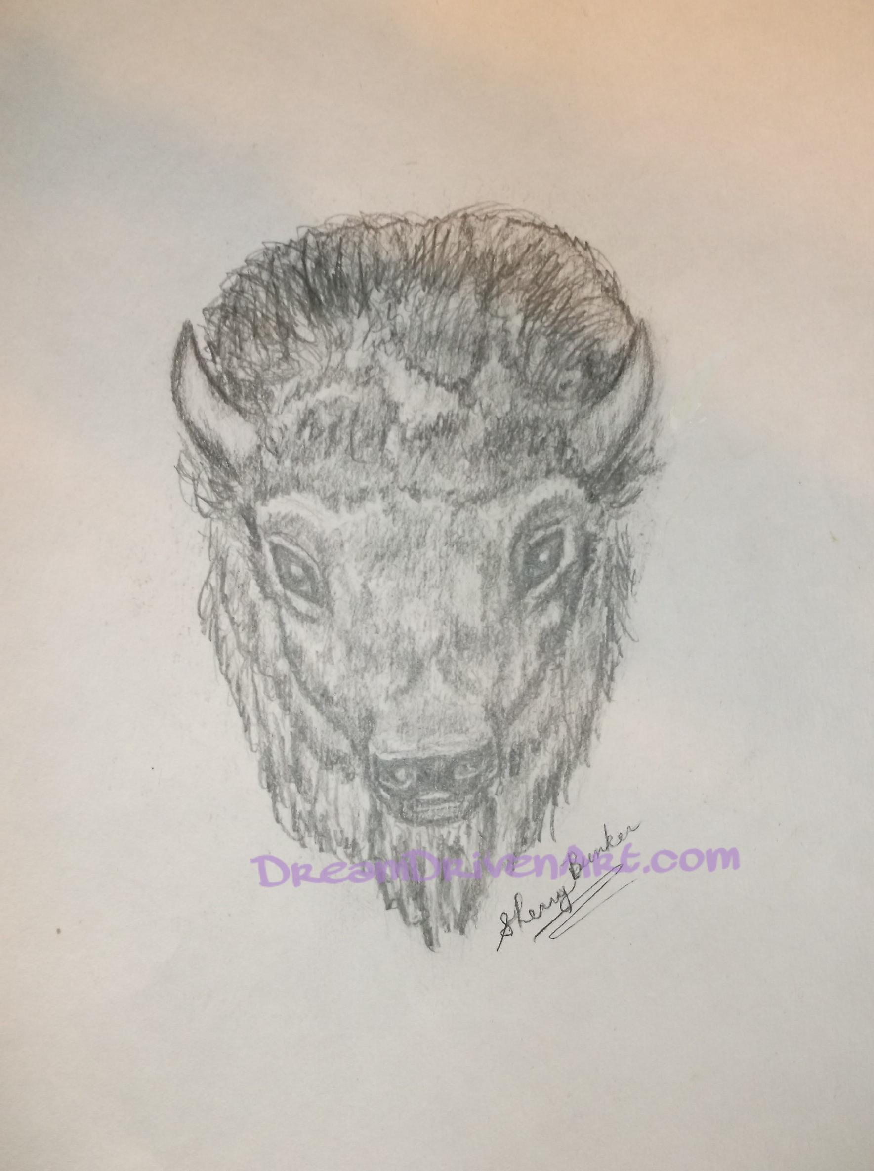 realistic buffalo head drawings