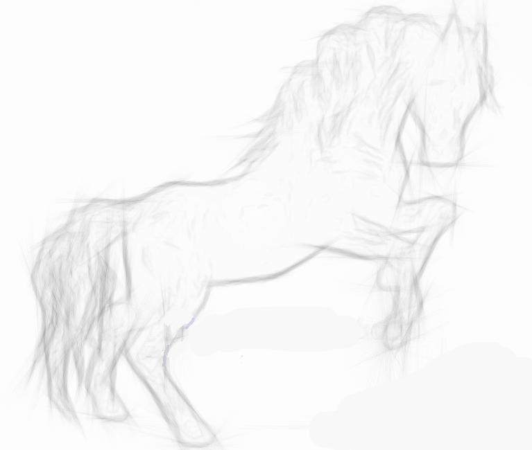 Pencil drawings horses
