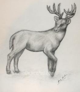 pencil sketches drawings deer sketch