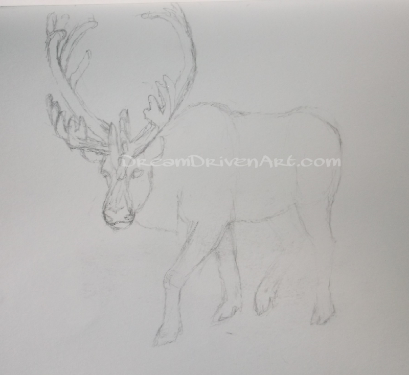 pencil sketches drawings of a caribou