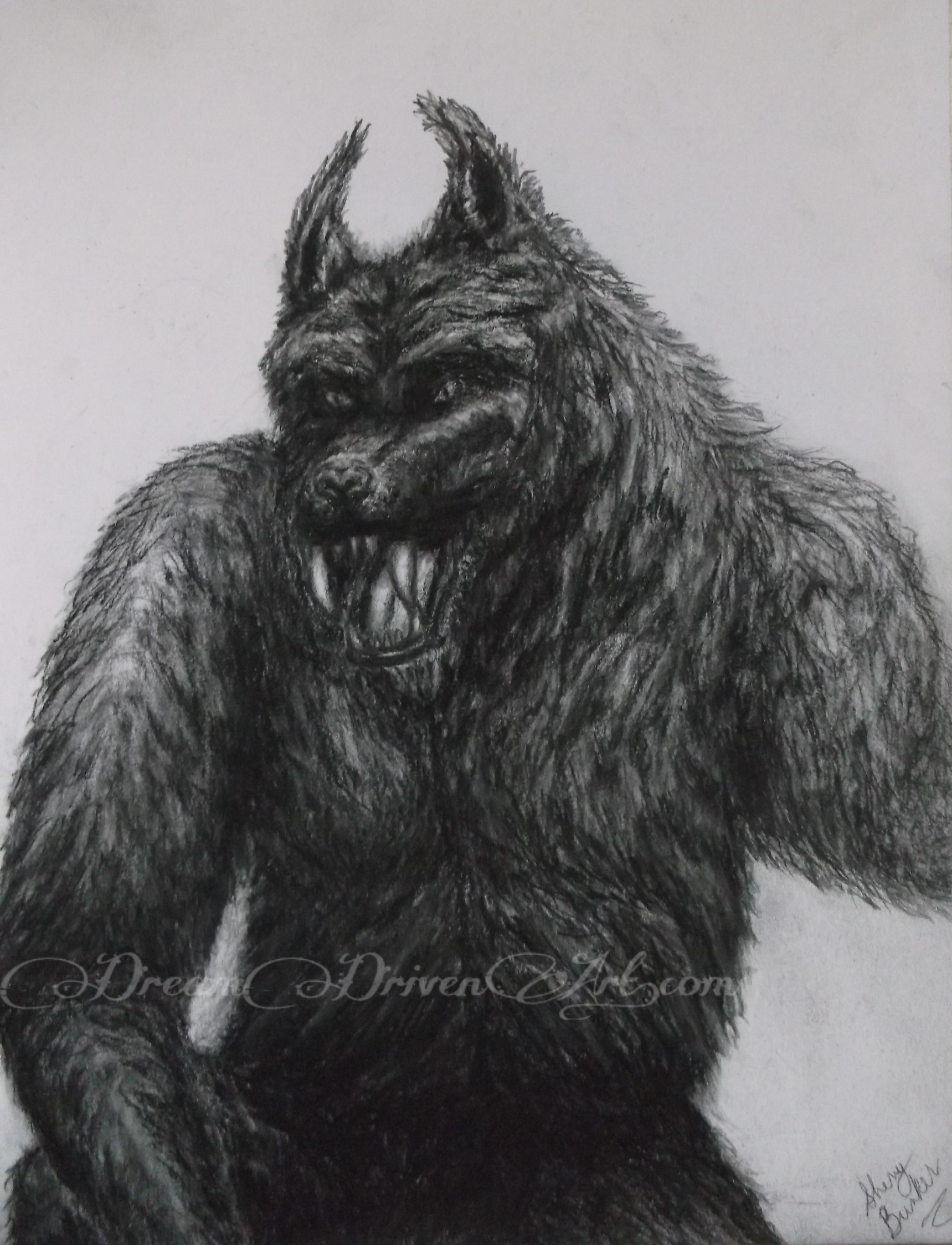 Pencil Drawings of Werewolf