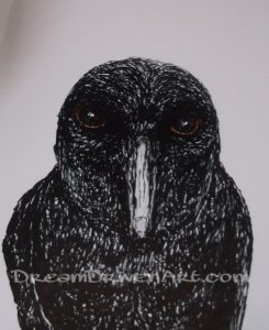 Pen and ink drawings and illustrations