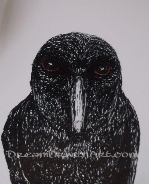 Pen & Ink Drawings & Illustrations – Drawing a Crow
